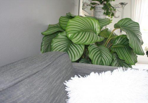 Orbifolia sfeer2