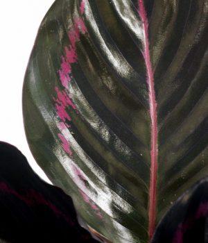 plantenbeelden voor steeketiketten 001