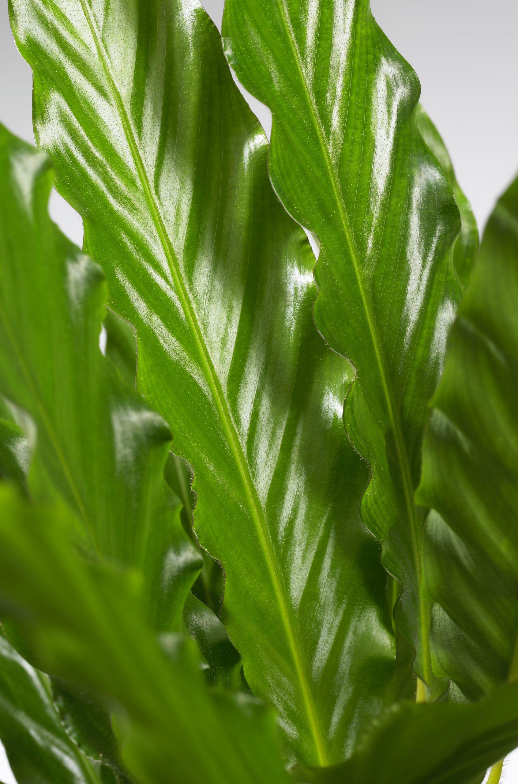 plantenbeelden voor steeketiketten 044