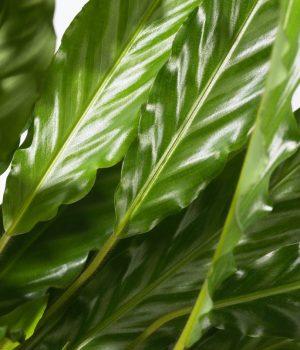 plantenbeelden voor steeketiketten 047