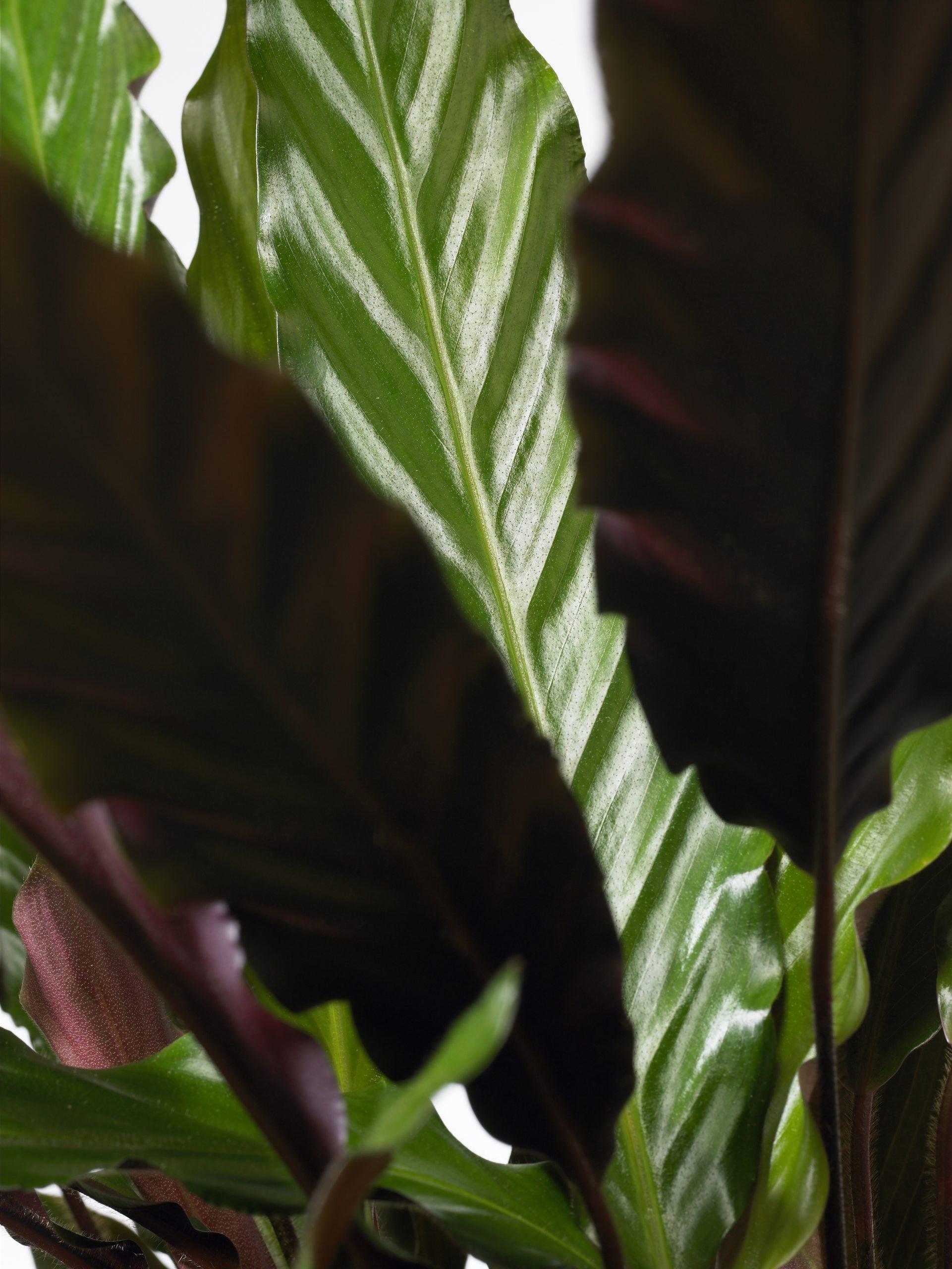 plantenbeelden voor steeketiketten 054