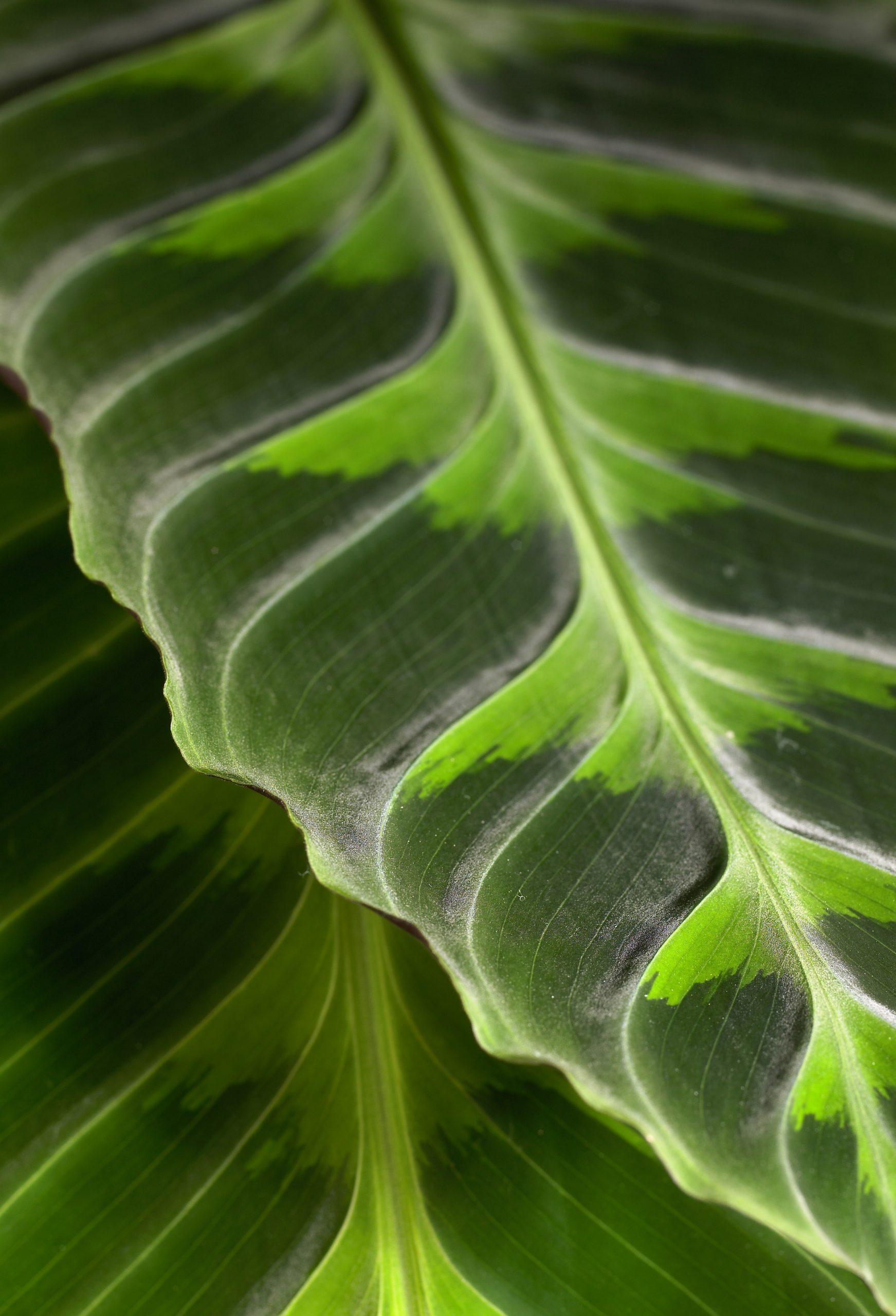 plantenbeelden voor steeketiketten 091