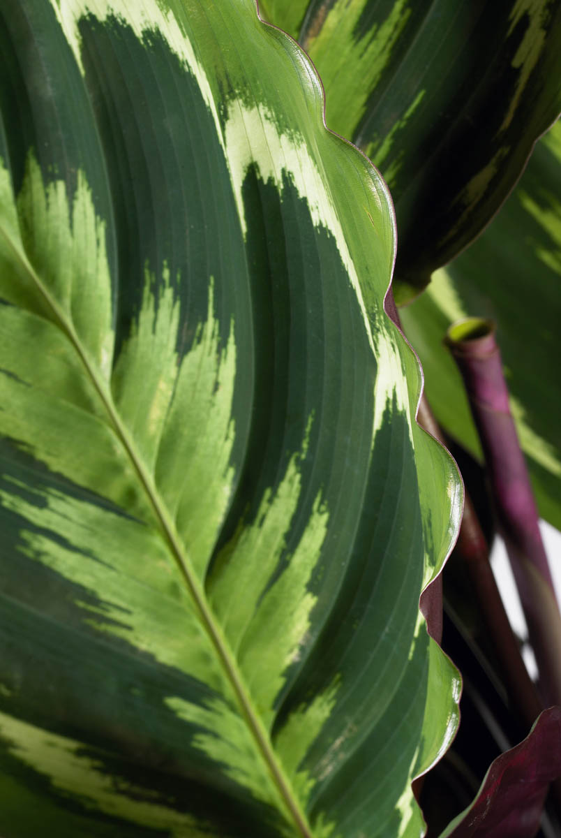 plantenbeelden voor steeketiketten 174